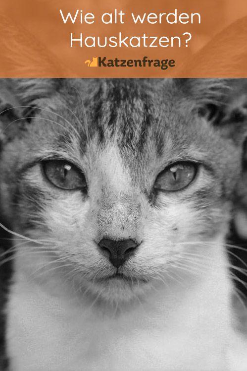 Pin Auf Katzen Im Alter