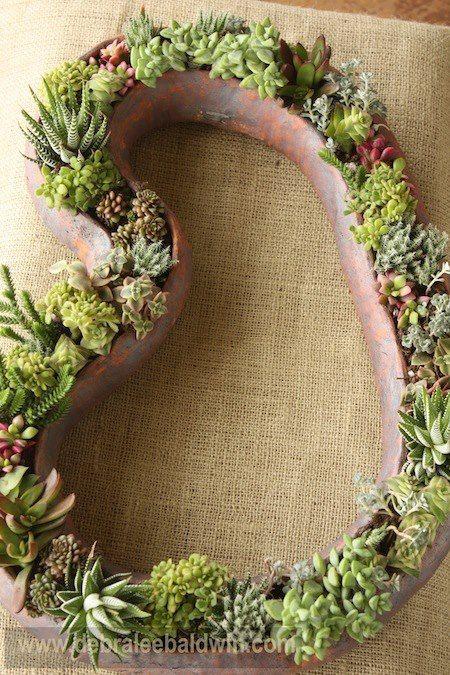87 best images about plantes grasses cactus succulents on pinterest flora succulent - Succulent container gardens debra lee baldwin ...