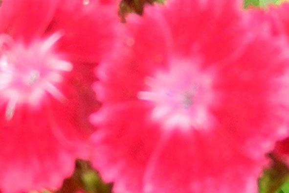 Garden flowers - Extreme closeup - 801
