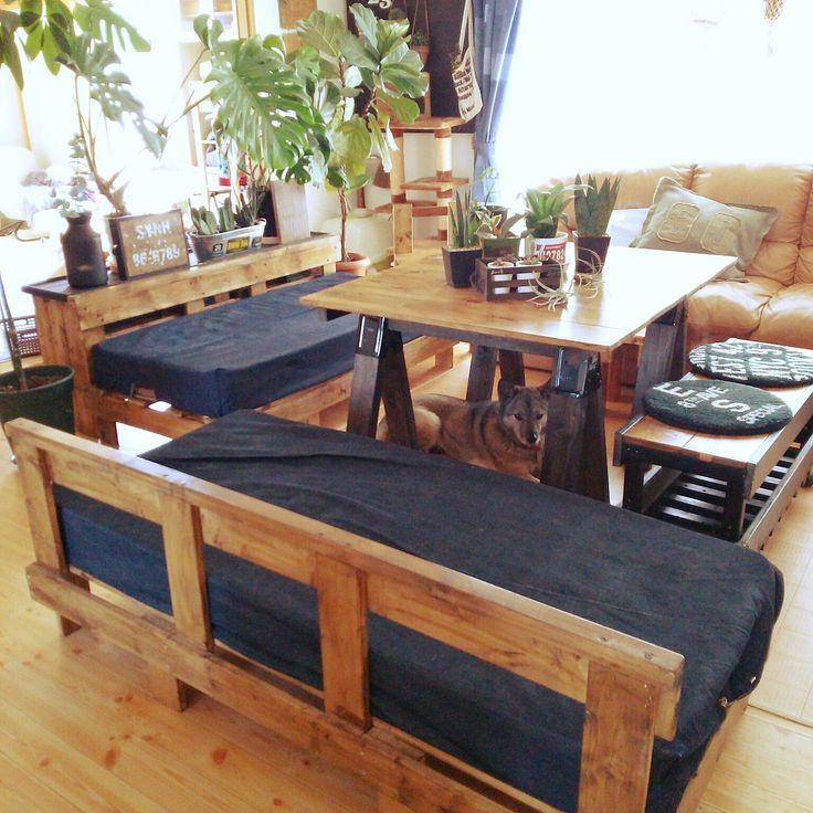 いぬ/観葉植物/DIY/DIYベンチ/DIYソファー/DIYダイニングテーブル…などのインテリア実例 - 2016-04-20 12:42:02…