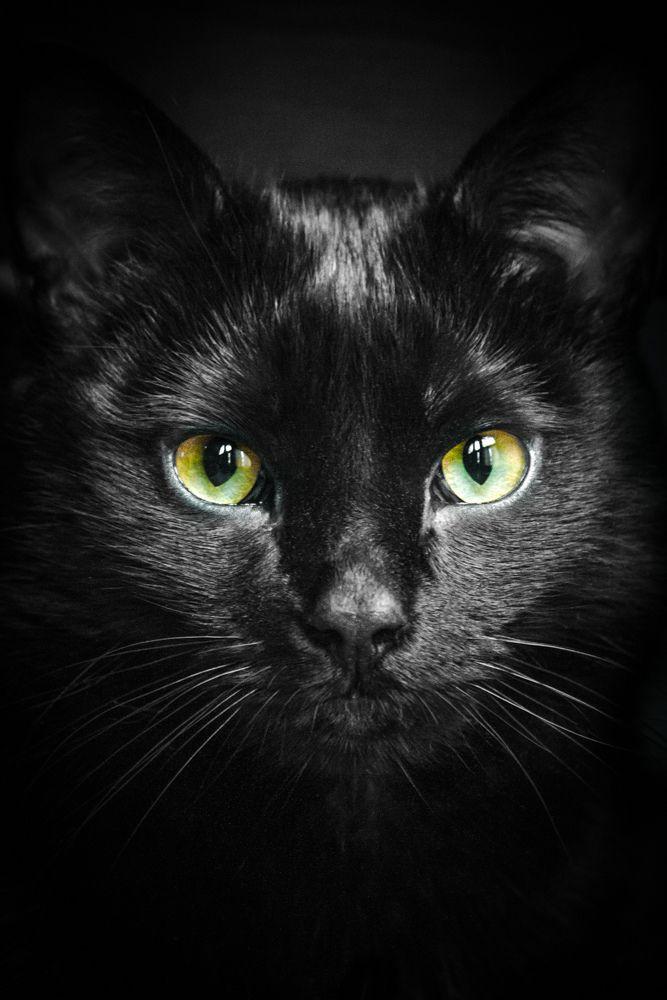 An Cat Dub (The Black Cat), chat noir