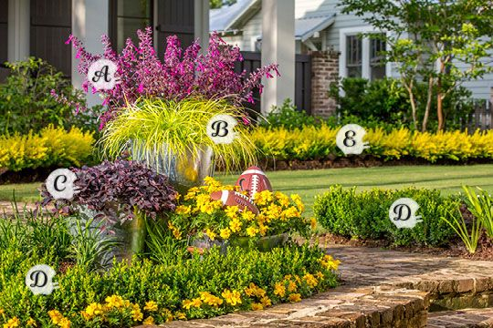 37 best Southern Living Plant Collection images on ...