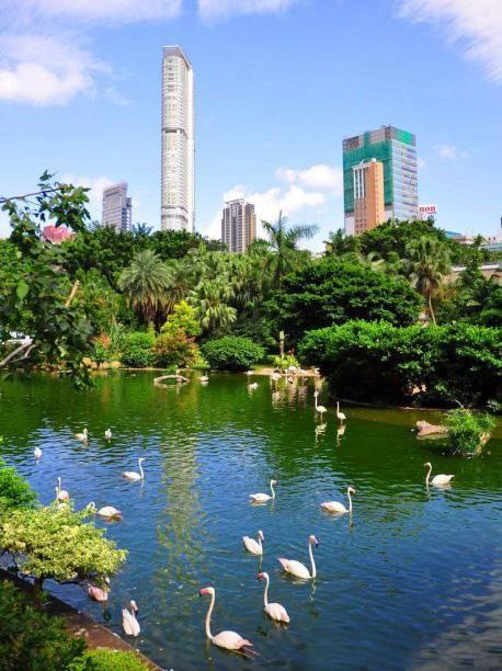 Kowloon Park: Flamingoes, bird aviary, lion dance on Sundays
