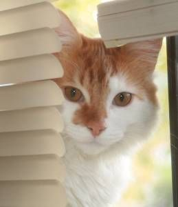 Where's Cookie? check this amazing photo from Katzenworld