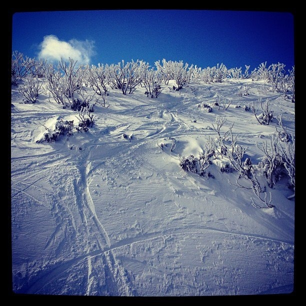 Mt Hotham- Orchard chair