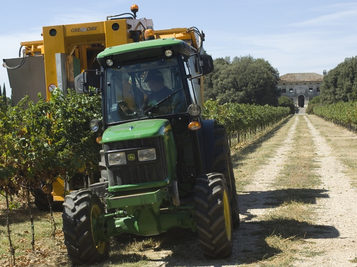 grape harvest machine
