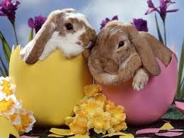 Easter Egg Hunts every day from Friday 25th - Friday 8th April at National Cat Centre, Chelwood Gate