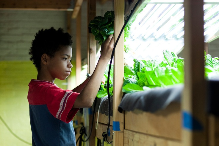 Fast Company article about the indoor farm we built at CDSC | A Hydroponic Farm Grows In This Brooklyn Food Pantry | Co.Exist: World changing ideas and innovation