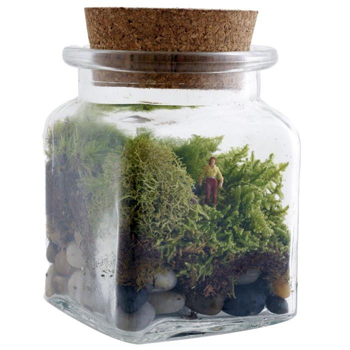 Moss garden.