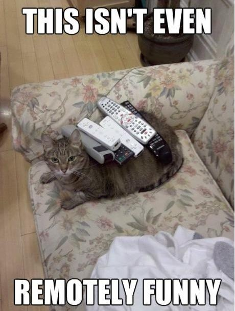 remotely funny - cat funny ; )