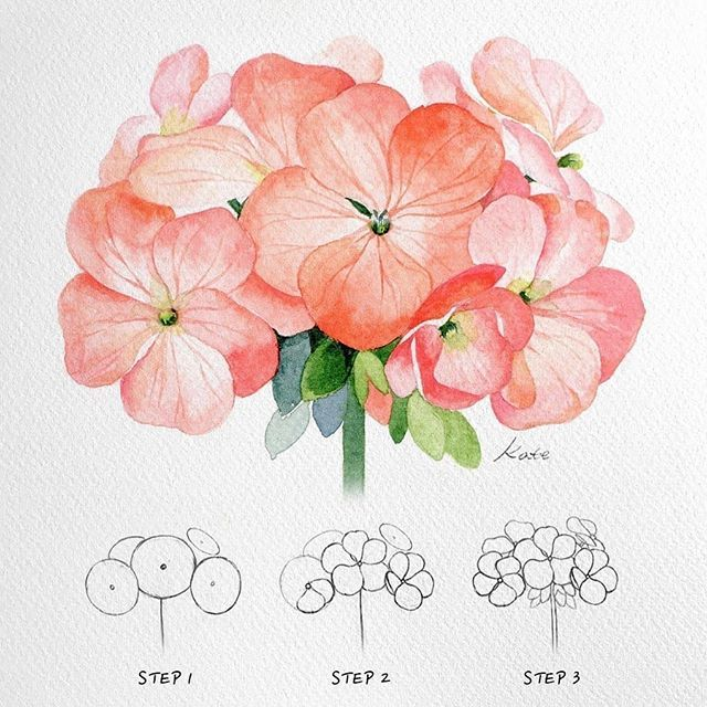 Vse Grani Akvareli Watercolor Illustrations Instagram Photos And Videos In 2020 Flower Drawing Draw Flowers Watercolor Watercolor Flowers Tutorial