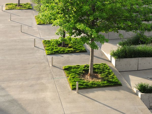 7 best ideas about tree landscaping on pinterest gardens