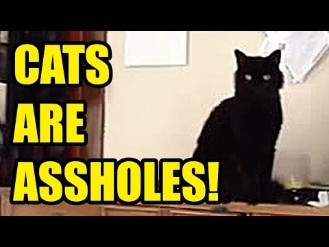For all you cat lovers out there... Yeah... They don't love you back....