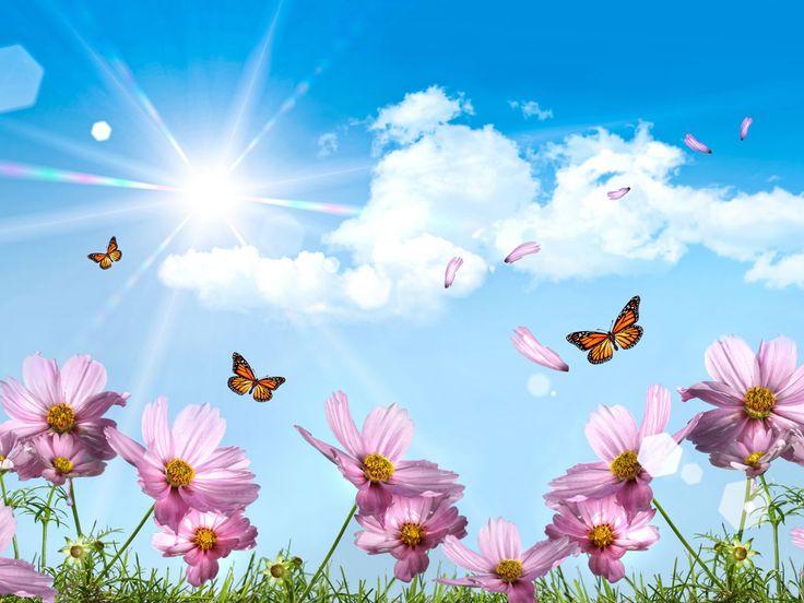 another pretty one    summer desktop wallpaper - Bing Images