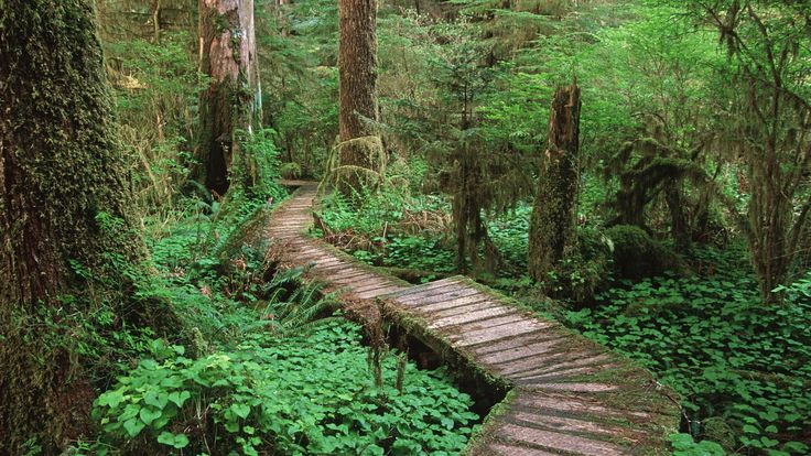 Carmanah Valley, Vancouver Island.  Carmanah Walbran Provincial Park is located 12 miles (20 km) northwest of Port Renfrew, on the southwestern coast of Vancouver Island