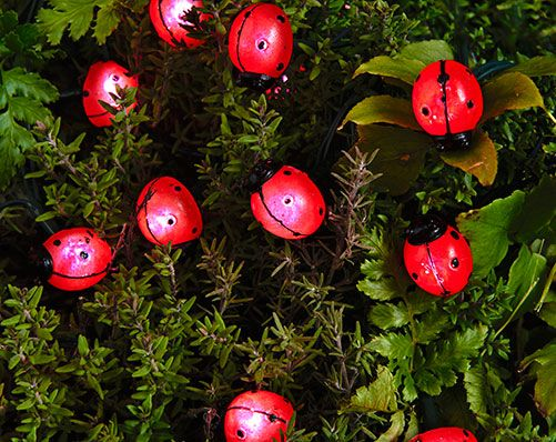 Ladybird String Lights £15  Perfect for hanging in shrubs, trees, trellises around decking and doorways. Includes 20 ladybird lights. Automatically turns on at dusk. Solar panel includes on/off switch and stake. Requires 2 x AA batteries (included). Ladybirds measure L2 x W1.5cm. Overall length 8m. Length from solar panel to first ladybird light approx. 2m  KLife Kleeneze