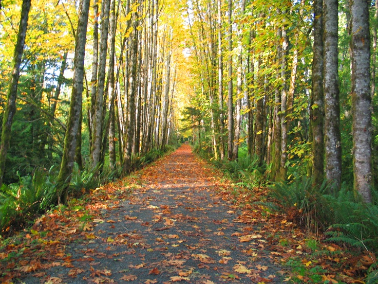 Galloping Goose trail in the fall is a gorgeous bike ride!!! Vancouver Island :)