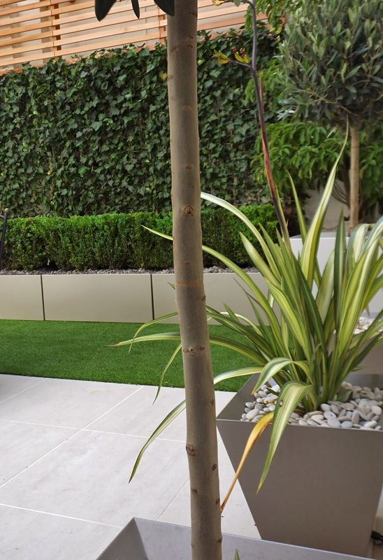 Topiary courtyard in london with white beige and sable - Jardineras modernas ...