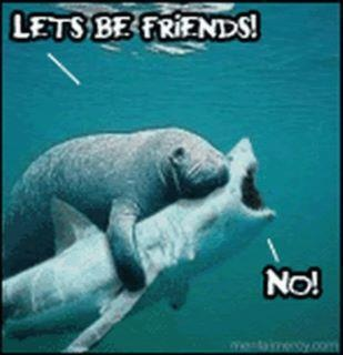 resistance is futile: Laughing, Friends, Funny Pics, Sharks Weeks, Funny Pictures,  Dugong Dugon, So Funny, People, Animal