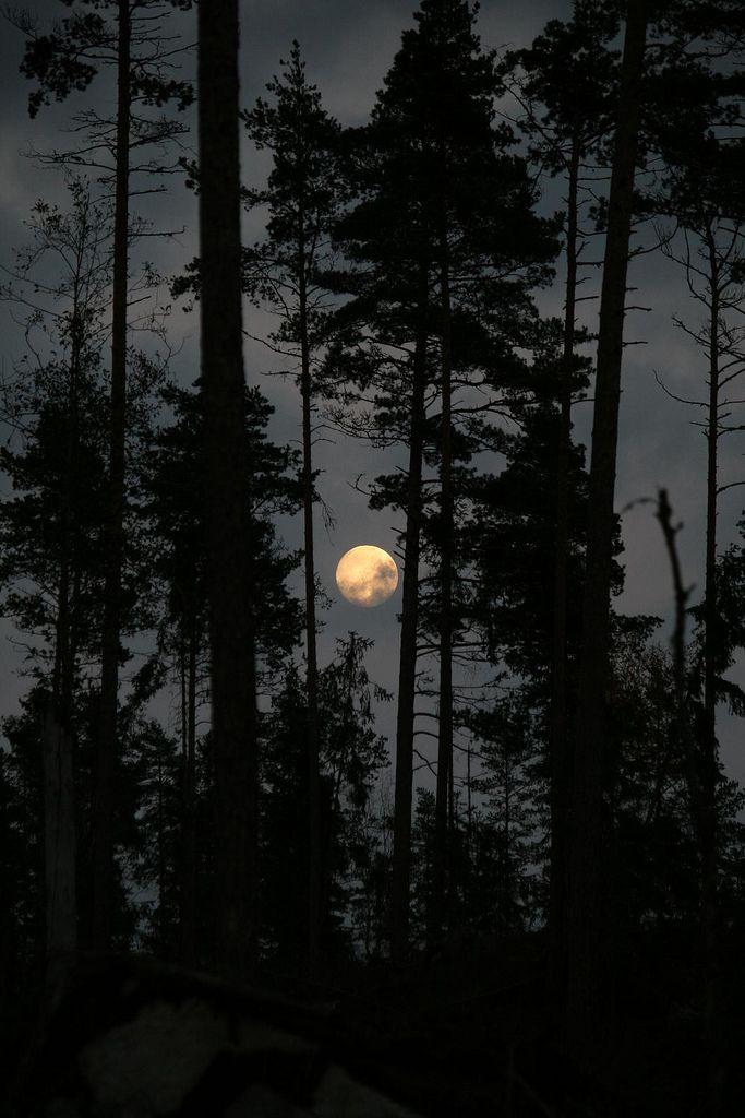 #night #trees #moon #shadow