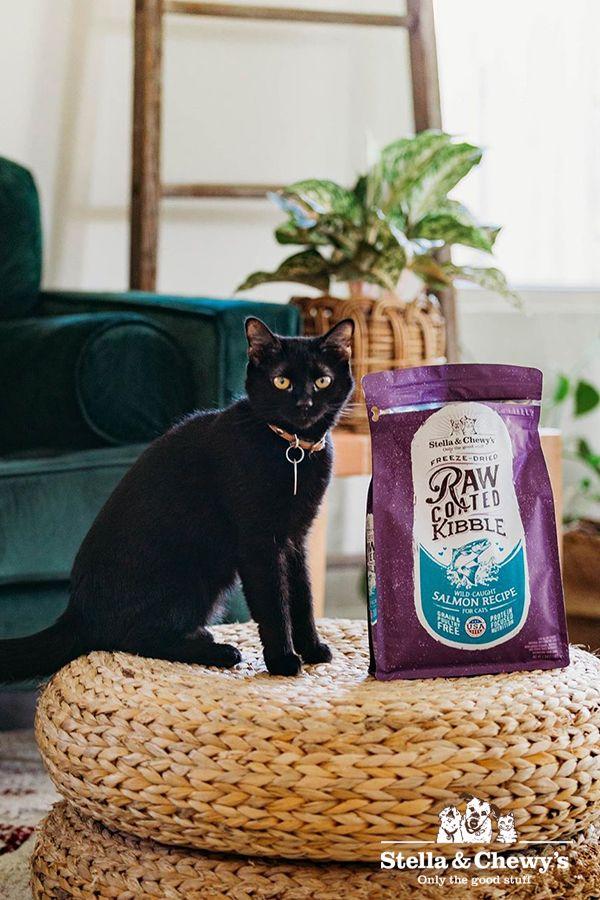 Raw Coated Kibble For Cats Natural Cat Food Cat Hug Wild