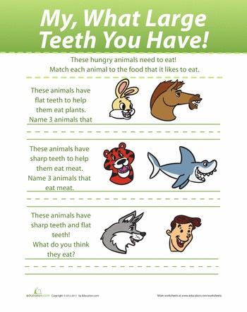 Worksheets: Animal Teeth