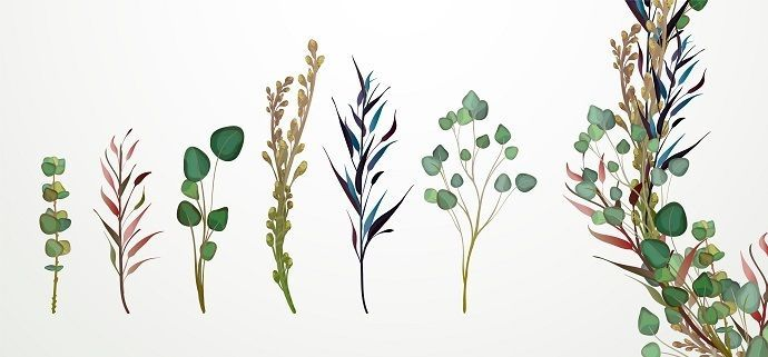 Aquarellstifte Pflanzen Alicia Aquarell Stifte Pflanzenzeichnung