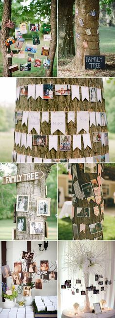 Family Tree photo display wedding decor / http://www.himisspuff.com/ideas-to-display-wedding-photos/