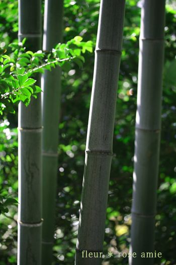 ☆.。.:*・花美を創造する毎日 in 二子玉川☆.。.:*・-お正月の風景