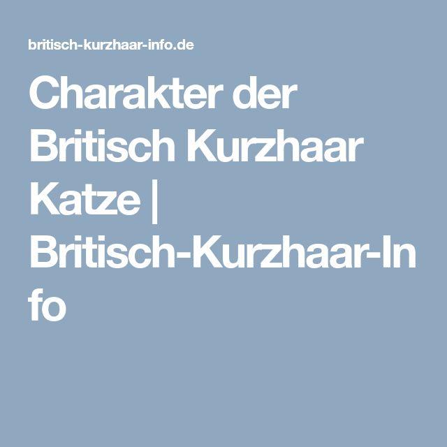 Charakter der Britisch Kurzhaar Katze   Britisch-Kurzhaar-Info