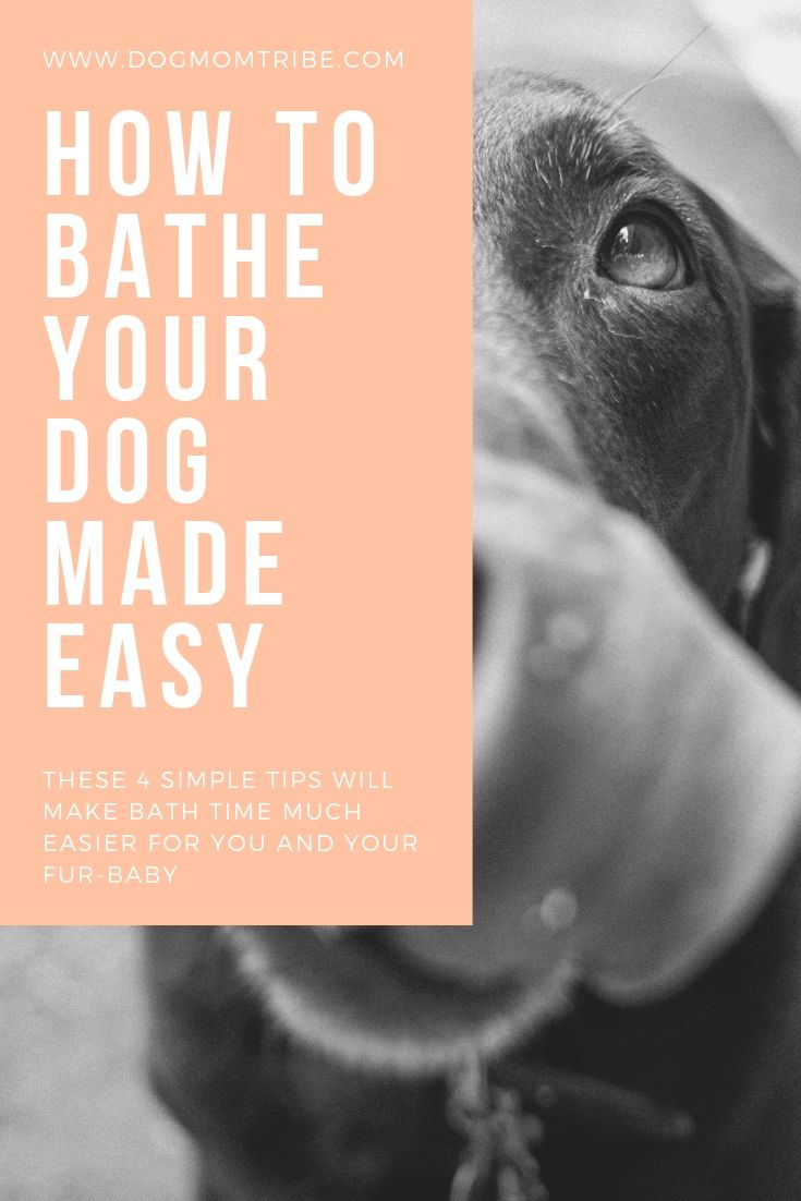 4 Tips For Dog Moms On How To Bathe A Dog At Home Dog Grooming
