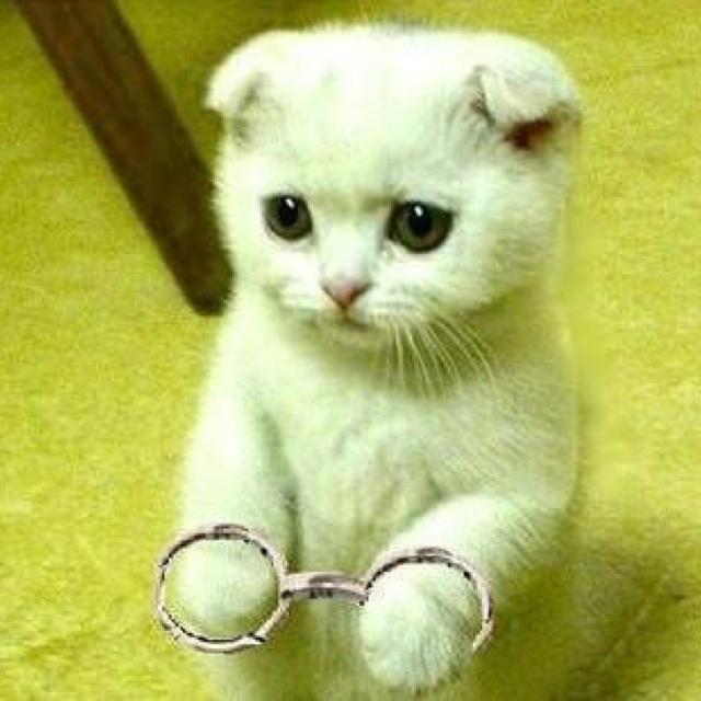 Guilty...: Kitty Cat, Kittencutecut Kittenskitten, Kitty Pics, White Kitty, Scottish Folding Kittens, Kittenskitten Stands, Adorable Animal, Real Kittens, White Kittens
