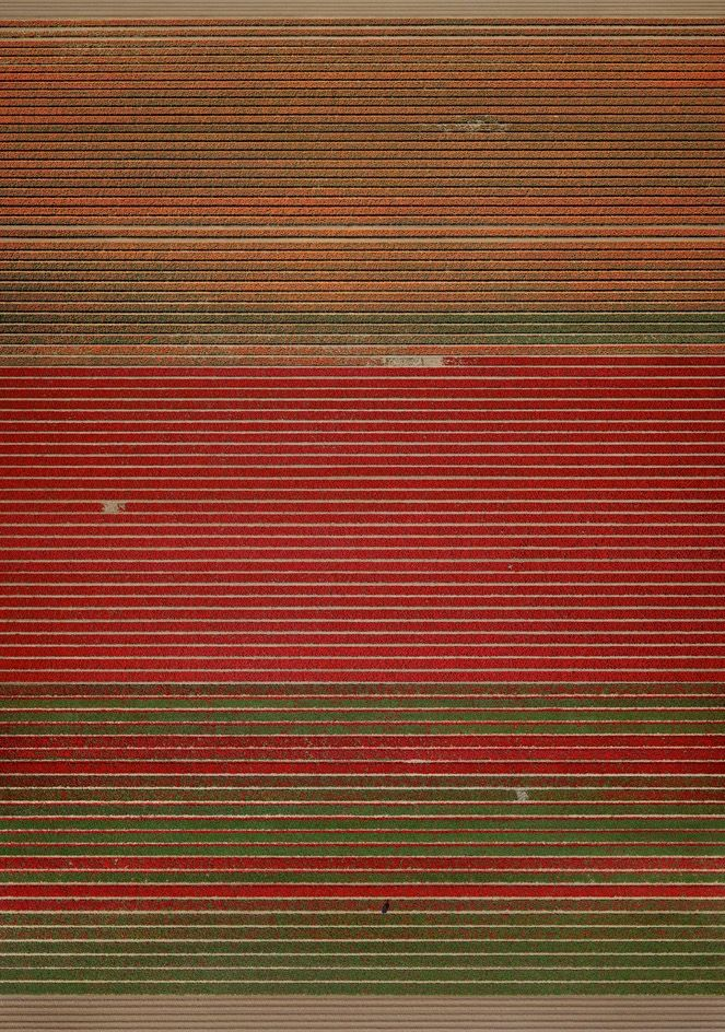 agriculture, gursky