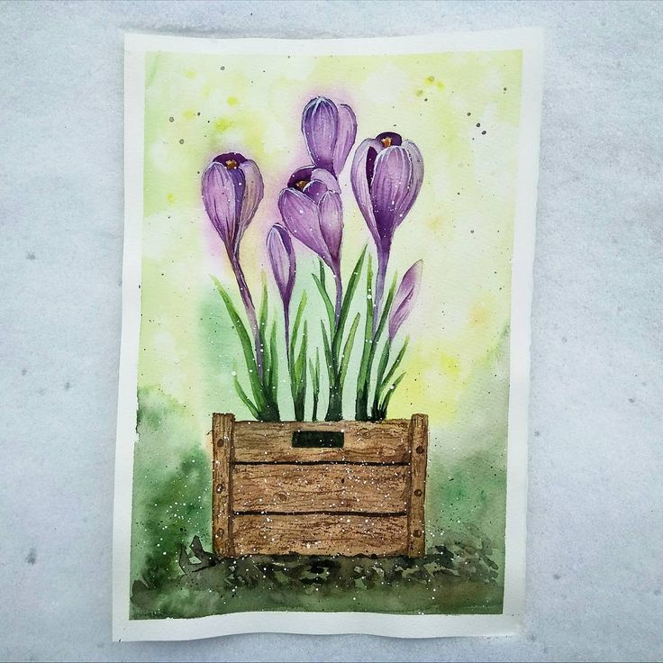 Crocus Instagram:  #крокусы #spring #springiscoming #flowers #sketch…»