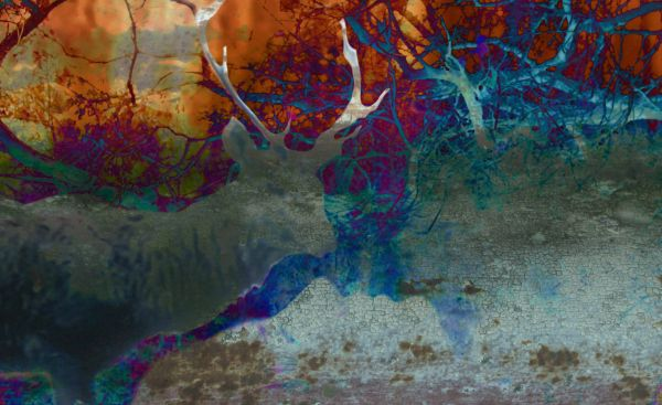 Fawn Gallery - A One exhibition Fine Art photographic print Concept #13