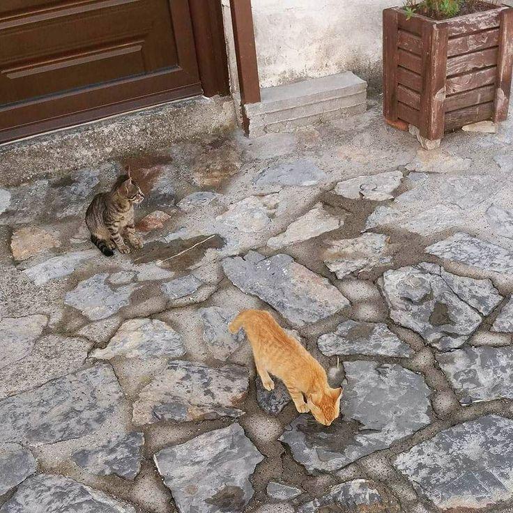Οι λεπτομέρειες της ζωής... #details #life #cat #catsofinstagram #greece #alley