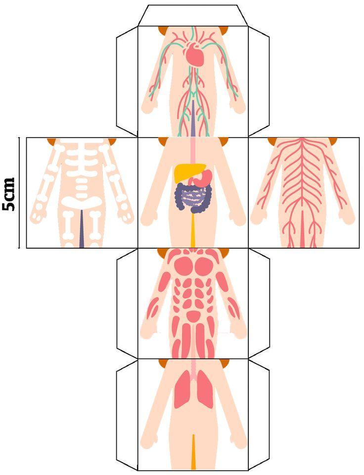 Resultado de imagen de desplegable cuerpo humano