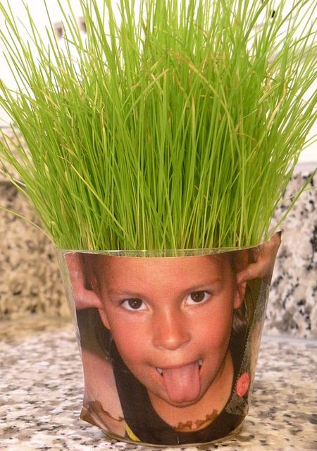 Another use for Wheatgrass…  Comments    What do you get when you combine a goofy picture of your kid with a bunch of Wheatgrass seeds?