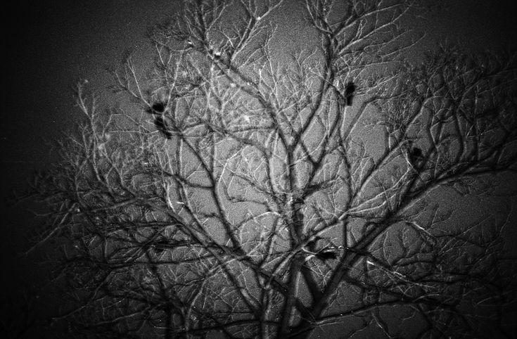 ravens f5