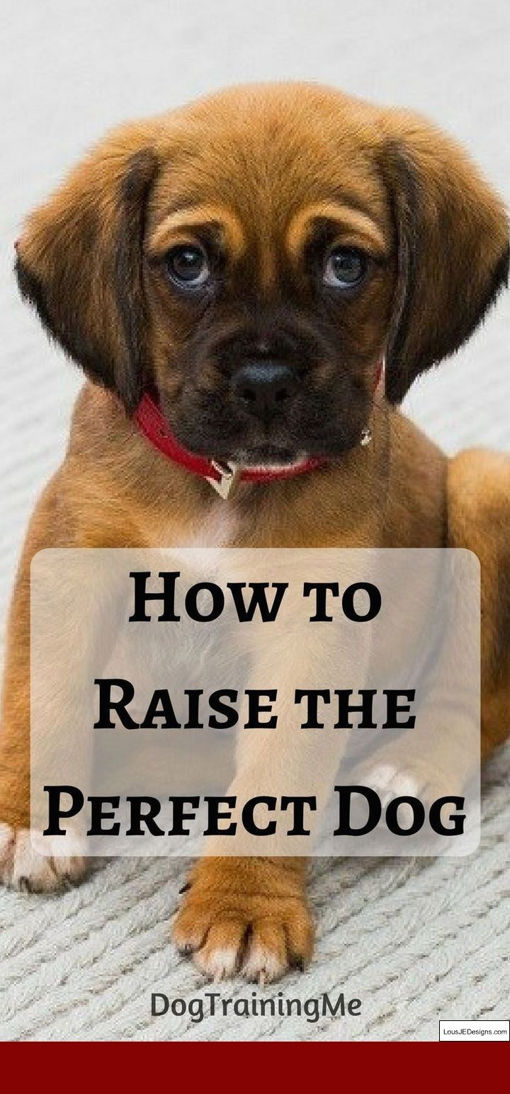 How To Teach Your Dog To Stop Barking At Strangers And Pics Of How