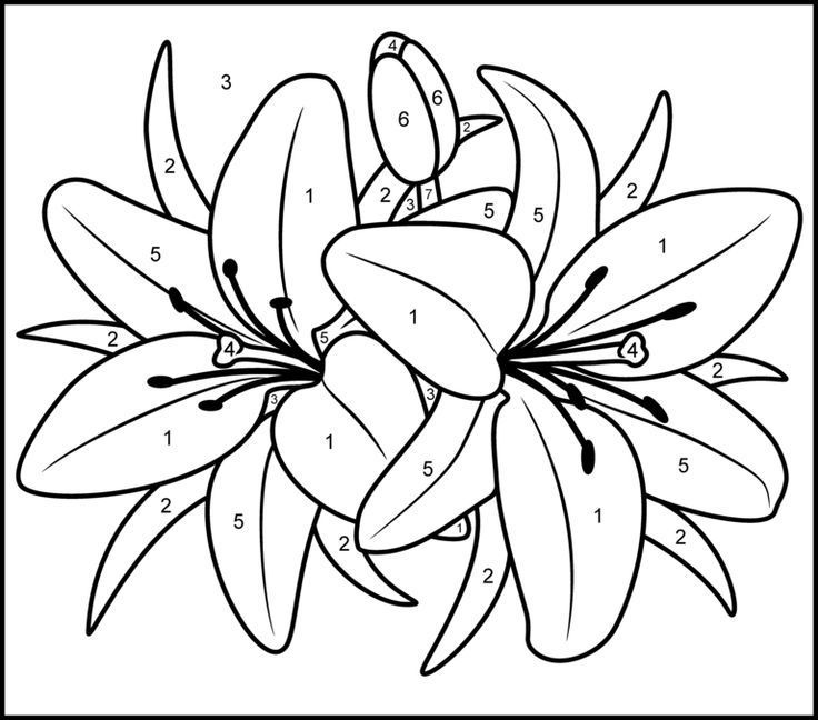 Color By Numbers Flowers Flower Coloring Pages Flower Drawing