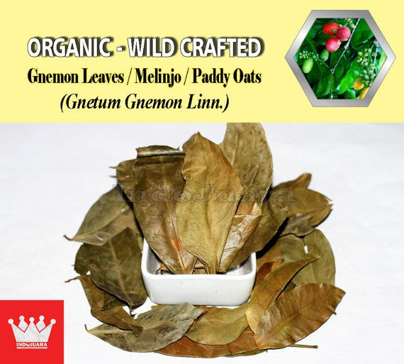 Melinjo leaves is generally used in Malay and Indonesian cuisines. Health benefits: Eye ailments, increase stamina, treat the dog bites, anemia, high cholesterol, hypertension, blood vessels narrowing, premature aging, etc. #GnemonLeaves #DriedHerbs #HerbalRemedies #HerbalMedicine