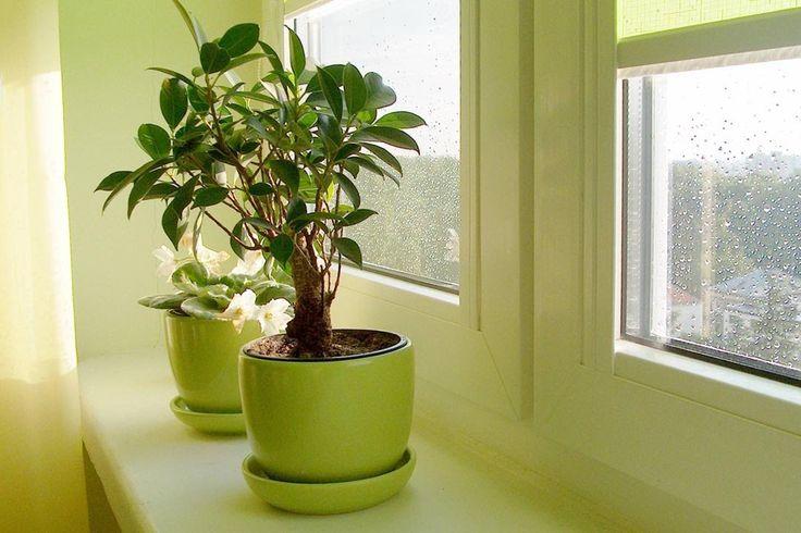 Цветы в интерьере – оформление квартиры комнатными растениями