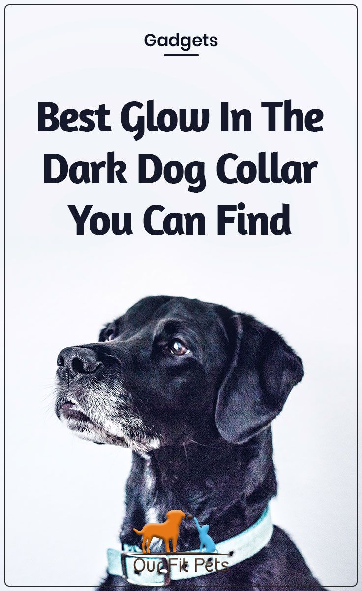 Best Glow In The Dark Dog Collar You Can Find Dogs Pets The
