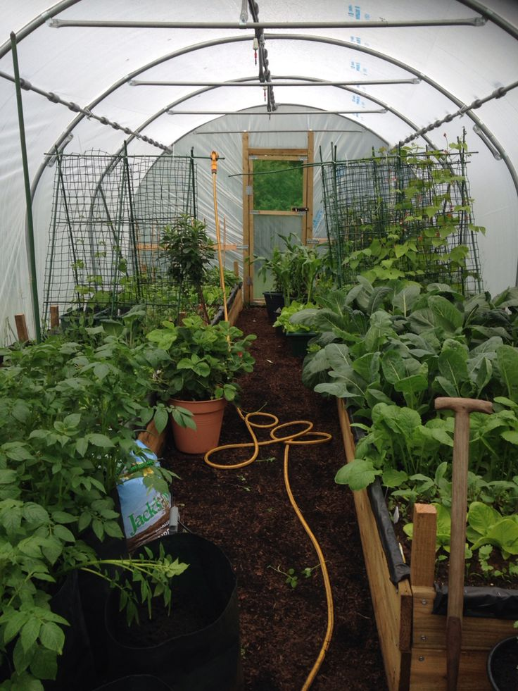 13 best polytunnel inspiration images on pinterest for Domestic garden ideas
