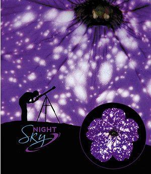 """Hänge-Petunie """"Night Sky®"""";3 Pflanzen"""