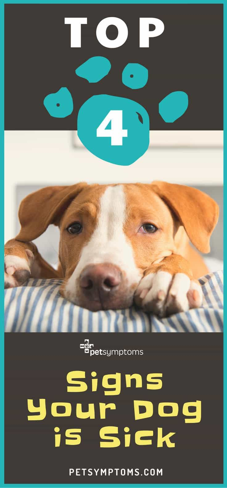 Minor pet health issues may be easily treated at home. Even some emergency situations benefit from home first aid. But when your dog shows one of these top 4 dangerous dog symptoms that could mean you have a sick dog, you need to consult with your veterinarian as soon as possible.