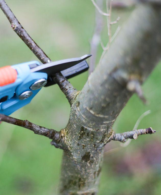 Apfel- und Birnenbaum schneiden leicht gemacht • Pflanzen Tipps & Tricks • 99Roots.com