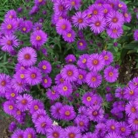 Flower Seeds Online | Bulk & Packets for Sale | Non-GMO - EdenBrothers.com