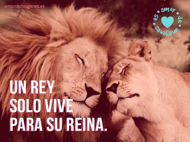 Hermoso post de imágenes de amor de leones cariñosos. Imágenes gratis con frases de amor diseñadas especialmente para compartir por facebook y google+.